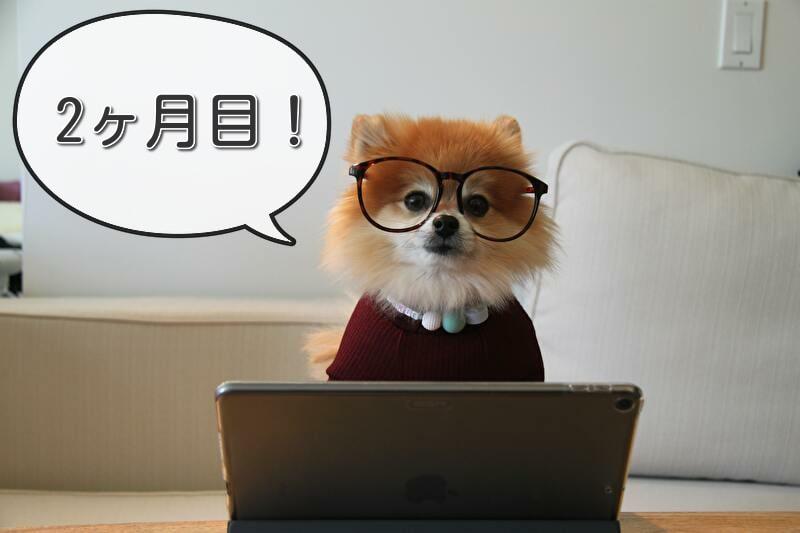 【地域ブログ 運営報告 2ヶ月目】PV数・収益は?毎日更新の成果は出たのか!