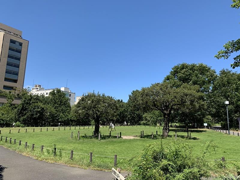 中目黒公園 広場